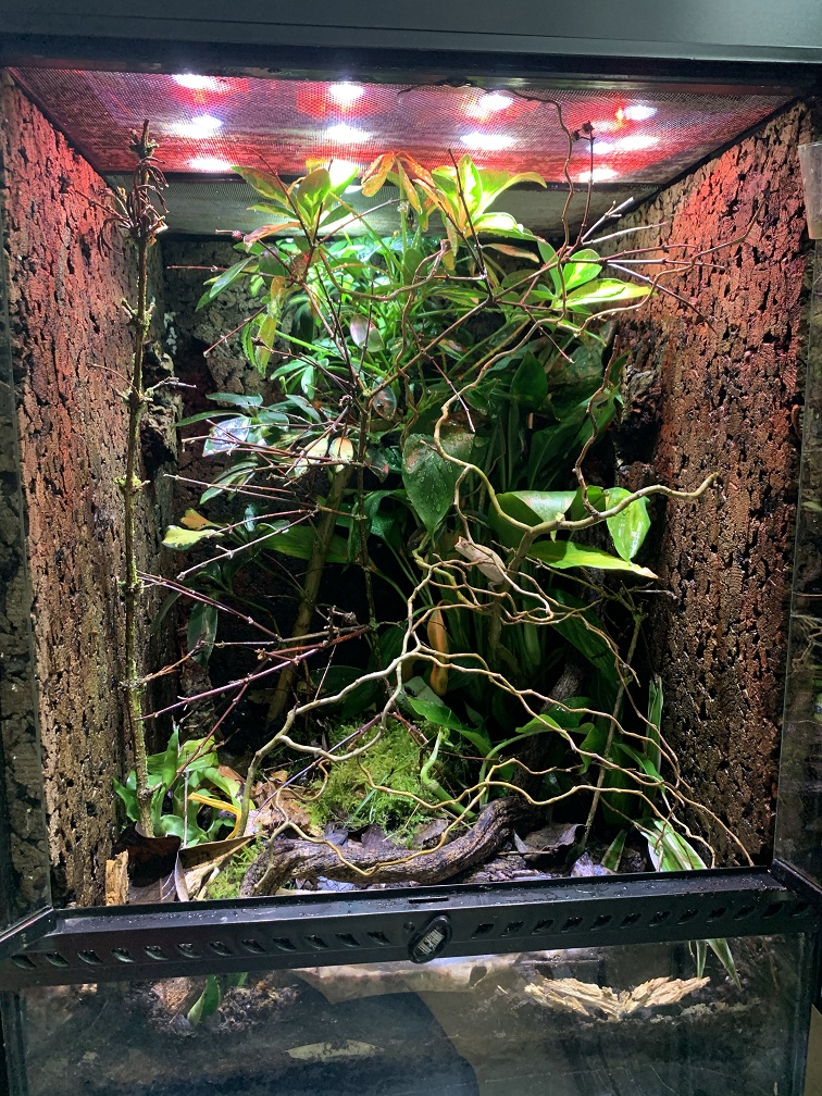 Terrarium für 0.1 Brookesia Superciliaris